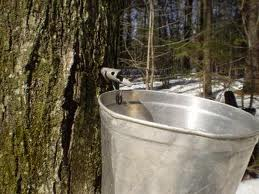 Google Images... maple sugar camp