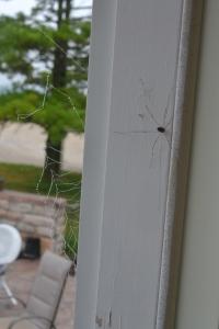 spider webs 011
